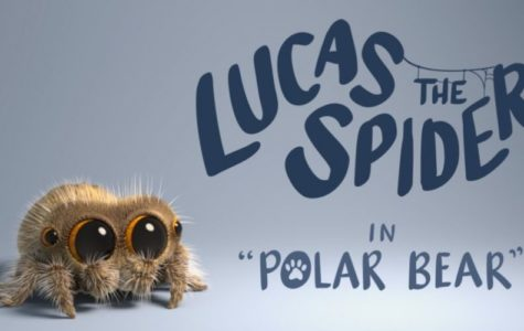 Lucas the Spider: an animated hope?
